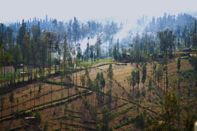 Salah satu sudut perladangan penduduk Ngadisari