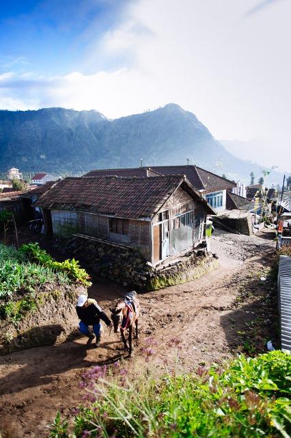 Suatu pagi di Desa Ngadisari
